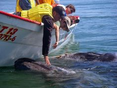The best place in the world to meet whales in the wild! Blog: https://medium.com/@bajabybus/is-lopez-mateos-baja-california-surs-best-kept-secret-52889cda6750