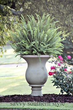 We love these Kimberly Queen ferns displayed in an over-sized urn. That's just one lovely feature in this yard seen on Savvy Southern Style. It gets us in the mood for spring planting!    @kan