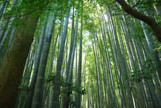 Hōkoku-ji Temple is a fascinating, hidden spot found by Kamakura station. Known as the Bamboo Temple, this scenic spot is highly recommended for those wanting some inner peace.