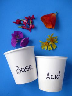 Test for Acids or Bases Using...Flowers! Activity