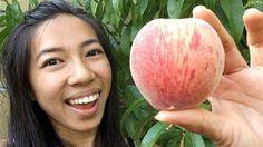 My 1st Amazing White Peach!