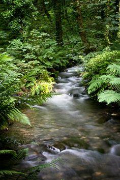 The Stunning Water Stream | Amazing Snapz St. Nectans Glen- Cornwall