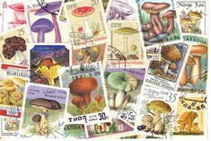 Mushroom Stamp pc | por bbsporty