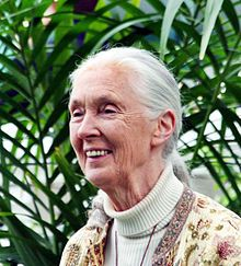 Dame Jane Morris Goodall, DBE (born Valerie Jane Morris-Goodall on 3 April 1934)[1] is a British primatologist, ethologist, anthropologist, and UN Messenger of Peace.[2] Considered to be the world's foremost expert on chimpanzees, Goodall is best known for her 45-year study of social and family interactions of wild chimpanzees in Gombe Stream National Park, Tanzania.[3] She is the founder of the Jane Goodall Institute and has worked extensively on conservation and animal welfare issues.