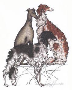 Borzoi and Greyhound Adoption Print Limited by matttolentino, $30.00