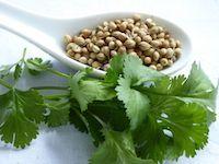 Koriander - Karai. Authentisch indisch kochen