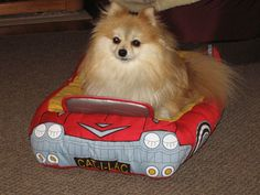 pomeranians dressed up | only driving this til my Pom-tiac is out of the shop.