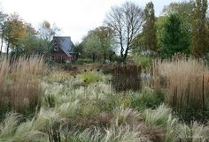 garden of grasses with a smattering of perennials  (don't know who or where - photo via Jakobstuin)