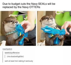 Funniest Animal Pictures Pop-smoke-Navy-otters-funny-military-memes Sharing is caring, don't forget to share ! Funny Animal Memes, Cute Funny Animals, Funny Animal Pictures, Funny Cute, The Funny, Funny Memes, Otters Funny, Animal Pics, Silly Memes