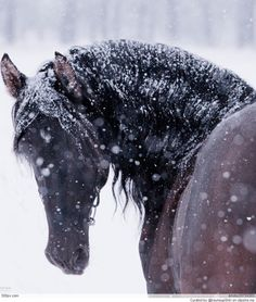 Horse | Community Post: 10 Gorgeous Pictures Of Horses