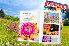 Maximilian Weinzierl – Fotografie – Blog: Frühling ist´s in ColorFoto