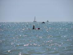 Paddling down the beach.  #beach #clearwaterbeach