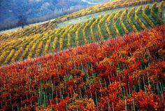 Langhe, Roero e Monferrato patrimonio mondiale dell'Unesco