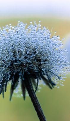 Kunice, Zakopane, Lesser Poland Love Natural, Natural Beauty, Eye For Beauty, Shades Of Blue, Flower Power, Poland, Beautiful Flowers, Dandelion, Flora