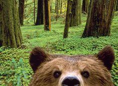 Curious Bear