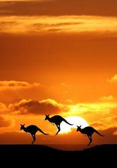 ✿ڿڰۣ(̆̃̃❤Aussiegirl #Australia Australia Gods Country.