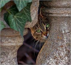 peekaboo, I see you  ♥