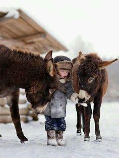 Domestic donkeys (E. africanus asinus) and child