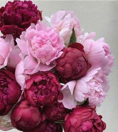 All Flowers, Amazing Flowers, Pretty Flowers, Blush Peonies, Peonies Bouquet, Bouquets, Nail Swag, Where To Buy Peonies, Peonies Delivery