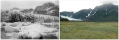 If you compare some of the photographs which can be found on NASA's website, you can really see how human beings have changed the appearance of our world over the years. The time difference between these images ranges from five to 100 years. Incredible stuff. Pedersen Glacier, Alaska. Summer, 1917 — summer, 2005