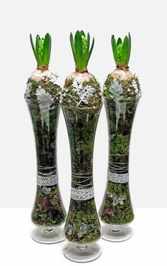 Moss ball hyacinths