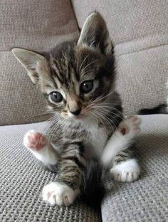 This is what I imagine Sneaky looking like as a kitten--just, you know, quieter.