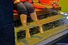 Weird And Wonderful Prague - fish pedicures. Wacky!