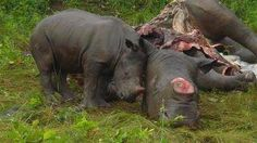 http://www.change.org/petitions/rhinoceros-in-south-africa-need-your-help-before-their-extinction