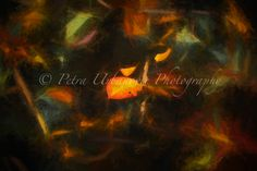 Autumn leaf Photography For Sale, Fine Art Photography, Autumn Leaves, Colours, Prints, Painting, Fall Leaves, Art Photography, Painting Art