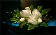 magnolias are beautiful foliage