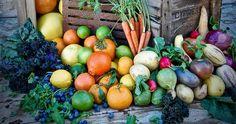 My edible garden with steve hampson.jpg