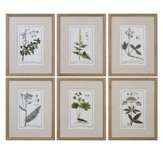 Three Posts 'Floral Botanical Study' 6 Piece Framed Graphic Art Print Set on Wood in Green Frames On Wall, Framed Wall Art, Framed Prints, Wooden Frames, Painting Prints, Art Prints, Art Paintings, Sr500, Bathroom Wall Art