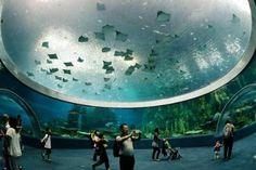 El mayor acuario del mundo listo para ser laboratorio de reformas | Informe21.com #photography