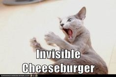 Funny Cat Pictures with Captions Cheeseburger | ... invisible - Lolcats n Funny Pictures - funny pictures - Cheezburger