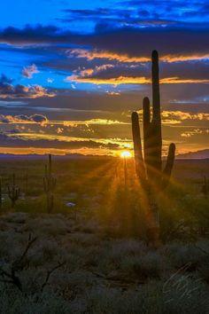 Casey Stanford's photo of Arizona sunset