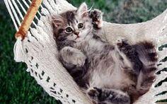 kedi için hamak keyfi