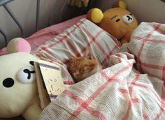 日本の「まるで人間のように眠るネコ」が可愛すぎるwww【タイ人の反応】