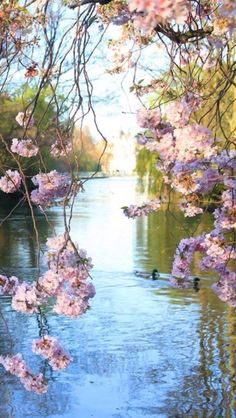 Dee, I love this beautiful spring picture! It makes me happy! Hope  it makes you feel the same! Have a lovely Sunday sweet friend! xoxo Maureen 2/27/16