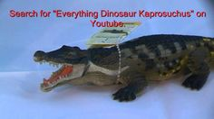 Everything Dinosaur's review of the model of Deinosuchus made by Safari Ltd, a replica of one of the biggest crocodiles of the Cretaceous. Real Dinosaur, Prehistoric Animals, Plastic Animals, Crocodiles, Crocs, Everything, Safari, Turtle, Model