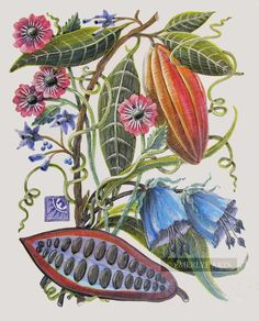 Cynthia Emerlye, Vermont artist and kirigami papercutter: Cacao - Final Nature Illustration, Botanical Illustration, Botanical Flowers, Botanical Prints, Veggie Art, Scratchboard, Botanical Drawings, Fauna, Vintage Pictures
