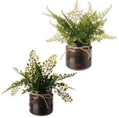 Sincerely Forever Inventory potted fern in brown jar with tweak wrap around. Great for table centerpieces.
