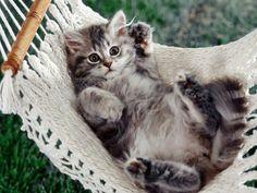 Chat dans un hamac