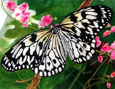 Paper Kite Butterfly  •  Watercolor on Paper  •  ©Pam Harp Watercolors Butterfly Watercolor, Watercolor Artwork, Harp, Kite, Watercolors, Photo Galleries, Gallery, Paper, Water Colors
