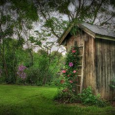 wood shed and clematis Clematis Trellis, Climbing Clematis, Climbing Flowers, Country Scenes, Garden Structures, Garden Inspiration, Beautiful Gardens, Garden Landscaping, Outdoor Gardens