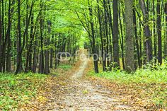 Photo: beautiful green forest
