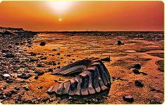 Environmental Destruction, Kuwait, Sulaibikhat Beach