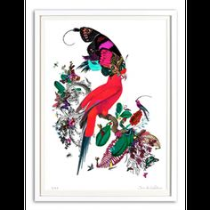 Buy Kristjana S Williams affordable art prints online including the Barraband Parrot Art Print. We ship our Kristjana S Williams prints worldwide. Collage Artwork, Artwork Prints, Fine Art Prints, Collages, Icelandic Artists, S Williams, Rise Art, Art Prints Online, Butterfly Art