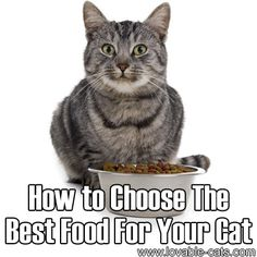 How to Choose the Best Food for Your Cat	►►	http://lovable-cats.com/how-to-choose-the-best-food-for-your-cat/?i=p