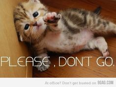 funny cat pictures with words - Google Search