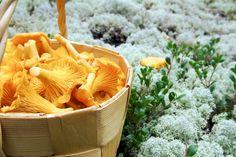 Pilze und Flechten © Risto Puranen/ Vastavalo/ Visit Finland